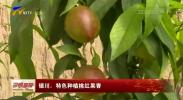 银川:特色种植桃红果香-190320