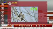 方言互动话题:那些鸟儿-190320