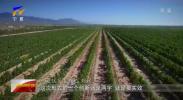 西夏区:问计于企 助力葡萄酒产业发展-190319