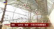 """固原:""""合作社+旅游""""打造乡村发展新模式-190402"""