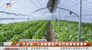 平罗县:小拱棚蔬菜产业托起移民致富梦-190424
