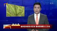 朔方平:植树造林要务求实效 爱绿惜绿需久久为功-190402