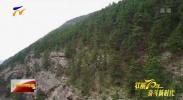 (壮丽70年 奋斗新时代·推动高质量发展调研行) 整治修复两年间 贺兰山重归绿色生机(上)-190509
