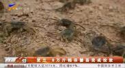 贺兰:8万斤稻田蟹苗完成投放-190510