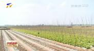 """贺兰县洪广镇:""""一村一品""""打造特色农业 带来脱贫致富新希望-190519"""