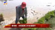青铜峡:水稻插秧工作全面展开-190519