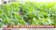 青铜峡:有机活体鲜蔬菜为移民群众开辟致富路-190523