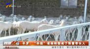 """平罗:""""羊倌""""老吴转型成了致富带头人-190516"""