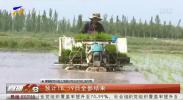 青铜峡水稻插秧工作全面展开-190517