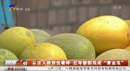 """有没人种到抢着种 红寺堡甜瓜成""""黄金瓜""""-190613"""