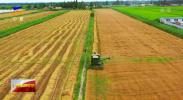 宁夏小麦夏收全面展开 全区夏粮有望再获丰收-190711