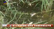 银川北塔湖南湖现大量死鱼 市民捕鱼有碍生态平衡-190708