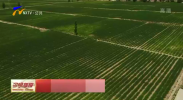 盐池县:黄花菜成农民