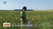 红寺堡:种下黄花菜 走向致富路-190726