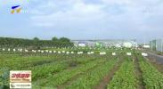 2019年中国蔬菜产业大会在银川召开-190717