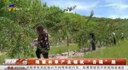 """隆德林草产业铺就""""杏福""""路-190711"""