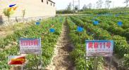 宁夏农业生产社会化服务能力稳步提升 促进农业高质量发展-190707