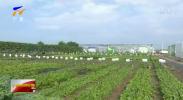 2019年中国蔬菜产业大会在银川召开-190718