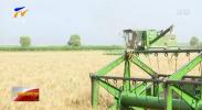 宁夏小麦匀播技术示范成效显著-190730