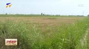 宁夏:精准攻坚盐碱地 270多万亩农田有望变良田-190819
