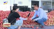 平罗西红柿深受外地客商青睐-190808