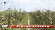 西红柿挂满枝 贺兰菜农愁销路-190826