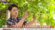 永宁:大青葡萄产销两旺 助农民增收-190827