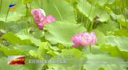 吴忠市利通区举办首届荷花节-190827