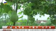 永宁县:小葫芦 大产业-190807