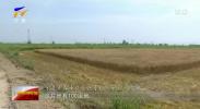宁夏:精准攻坚盐碱地 270多万亩农田有望变良田-190820