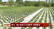 银川:精心培育400盆鲜花 扮靓城市-190809