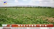 """原州区冷凉蔬菜""""俏江南""""-190923"""