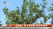 红寺堡:种下苹果树 结出致富果-190913