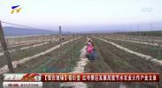 看巨变 红寺堡区发展高效节水农业大作产业文章-190928