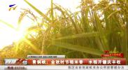 青铜峡:金秋时节稻米香 水稻开镰庆丰收-190928