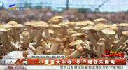 小蘑菇大丰收 农户增收乐陶陶-190926
