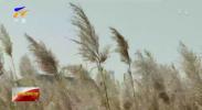 今迎寒露 近期宁夏冷空气活动频繁-191008