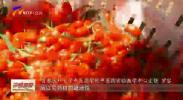 中国中医专家为宁夏枸杞药用把脉-191021