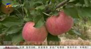 中宁:丰收苹果别样红 硕果累累奔小康-191019