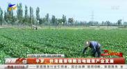 平罗:供港蔬菜领跑当地蔬菜产业发展-191008