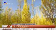 秋日凤凰公园成银川网红打卡地-191028