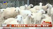 """平罗县宝丰镇""""牛羊产业""""唱响""""富民曲""""-191008"""