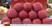 壮丽70年奋斗新时代|宁夏:丰收时节赛苹果-191014