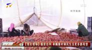 金凤区:西红柿种植让和顺新村走上致富路-191017
