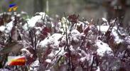 固原市迎来入秋后第一场降雪-191015