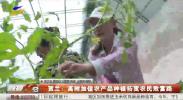 贺兰:高附加值农产品种植拓宽农民致富路-191011
