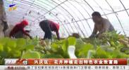 兴庆区:花卉种植走出特色农业致富路-191024