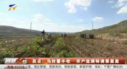 西吉:马铃薯丰收 农户盆满钵满喜盈盈-191024