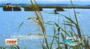 青铜峡库区自然保护区:十多年的休养生息 她惊艳了世界-191031