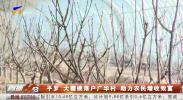 平罗:大樱桃落户广华村 助力农民增收致富-191129